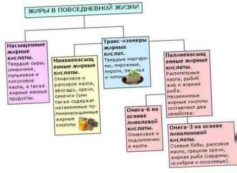 Влияние жира на организм человека