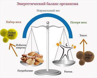 энергетический баланс организма