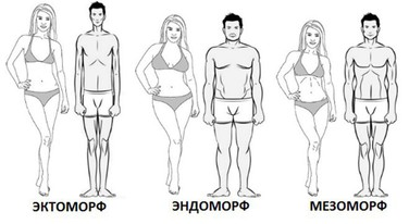 эктоморф мезоморф эндоморф фото